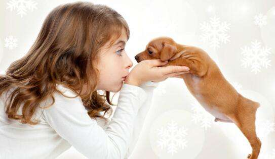 如何判断自己适不适合养狗?